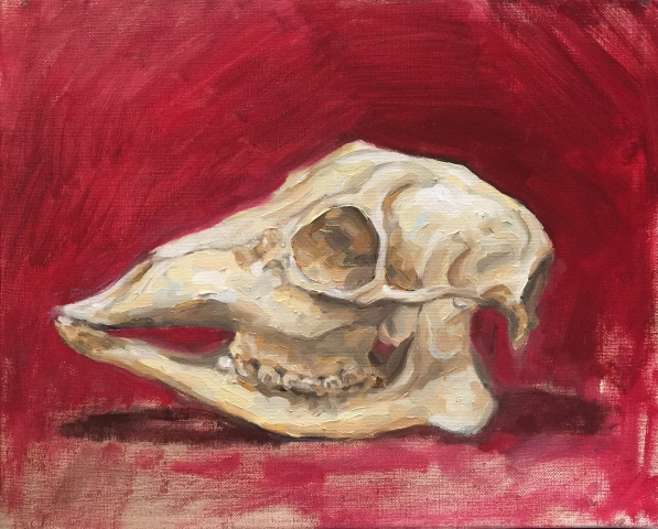 Deer Skull Study / Oil on Canvas / 41 x 33 cm / 2016