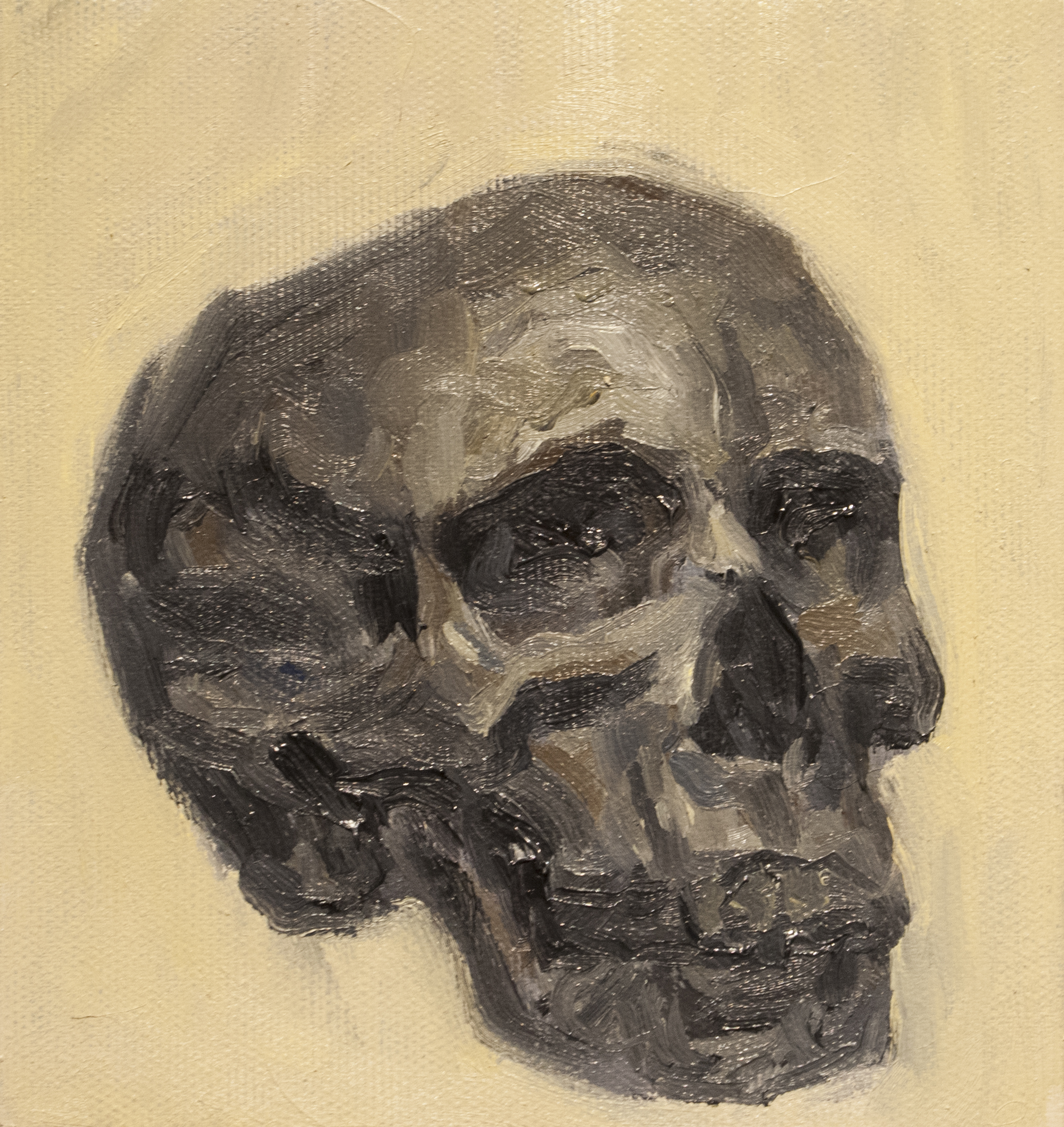 Skull Study #2 / Oil on Canvas / 15 x 16 cm / 2017